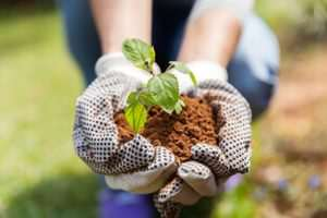 Great Gardening Tips That Anyone Can Follow