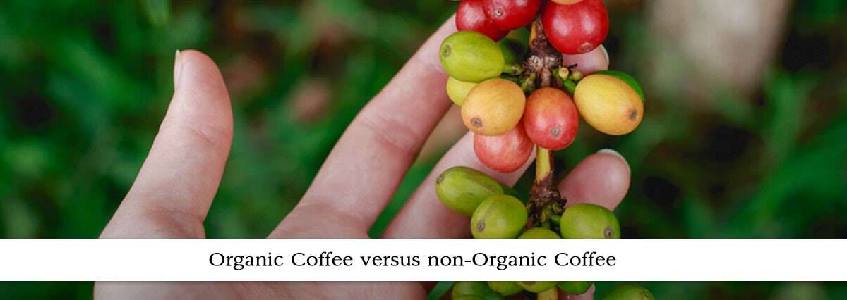 Organic Vs Non-Organic Coffee